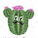 Cactus24 Mundo
