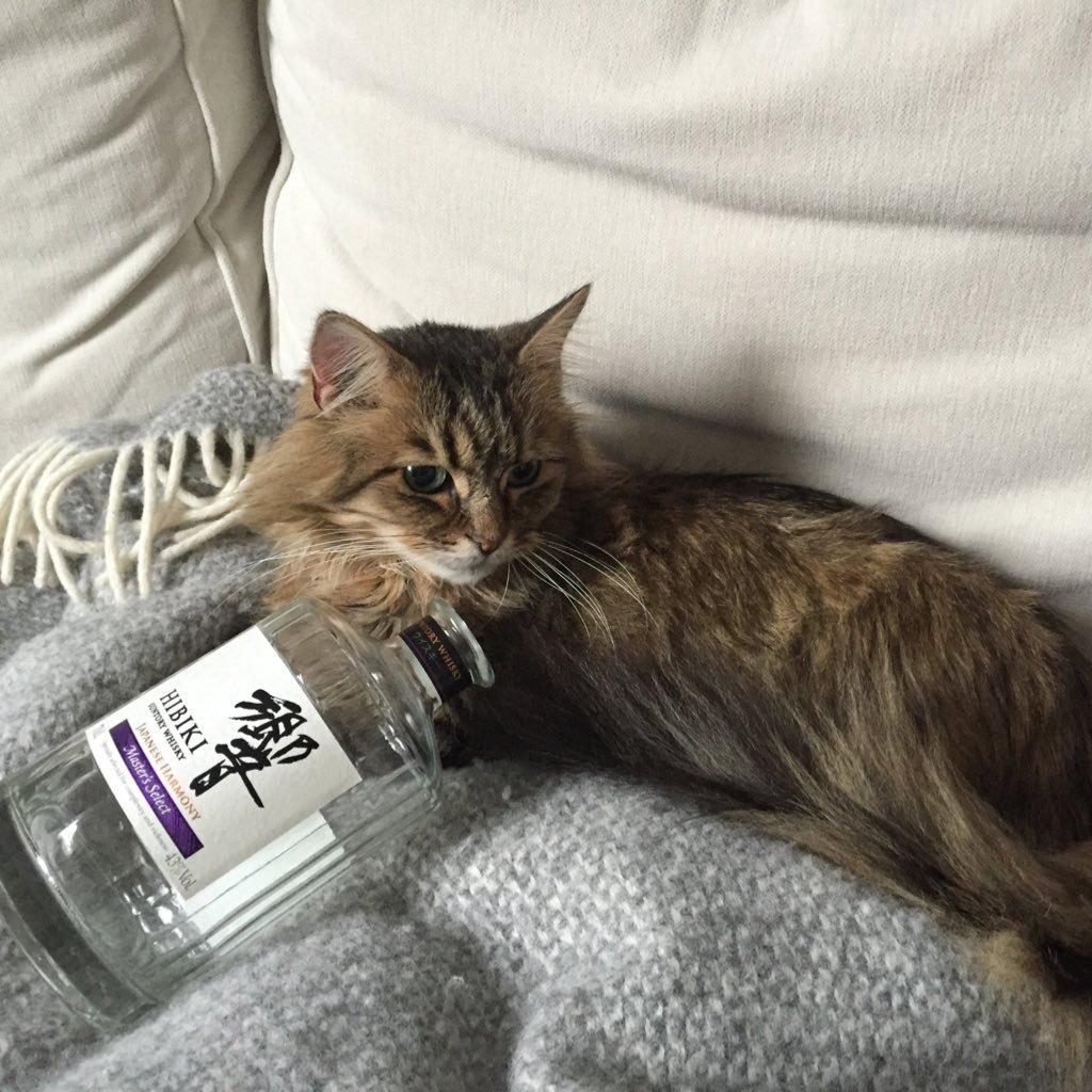 thewhiskybarrista (@divegin )
