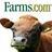 Farms.com Beef News