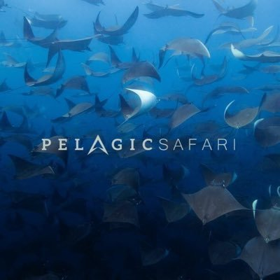 Pelagic Safari
