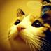 @orangecats