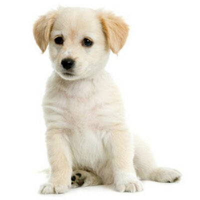 Puppies Adoption (@PuppiesAdoption) | Twitter