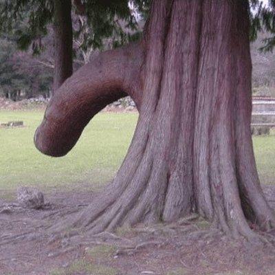 My Penis Com