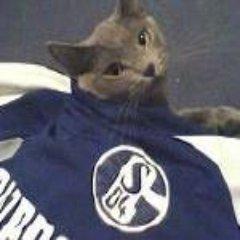 Schalke Paltan #MI