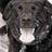 Roxstar Rescue Dog