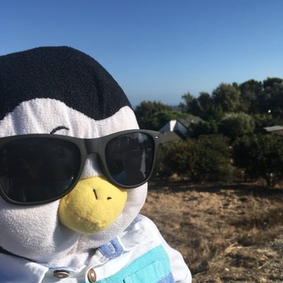perry the penguin on twitter we had a bit of a to do earlier