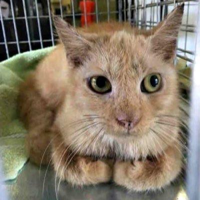 Urgent Cats of Tampa