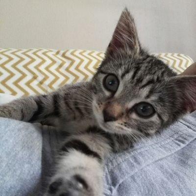 Maisa The Cat
