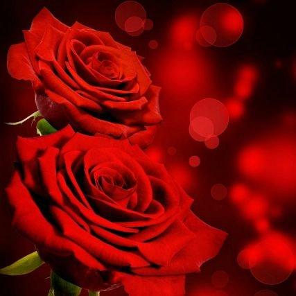 Bunga Mawar Indah D529a3a2eebd4e0 Twitter