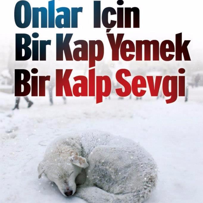 Hayvanları Koruyalım (@1kapmama) | Twitter
