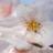 Flower morimori normal