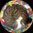 pota_nyanmo avatar