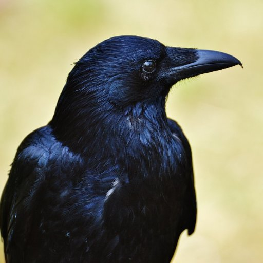 Samuel Crow Profile Image