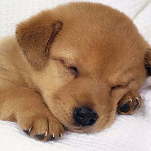 cute puppies doggosnpups twitter
