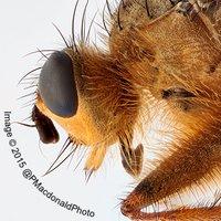 Edinburgh Entomology