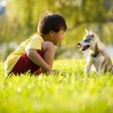 Dogs Nature