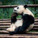 El Panda Pensador (@fobr) Twitter