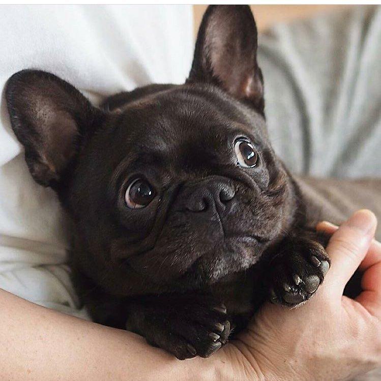 Lil G-Pug