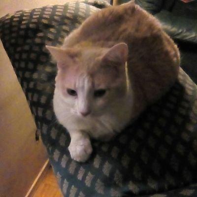 Bubbles: DeepStar Cat Six 🐈
