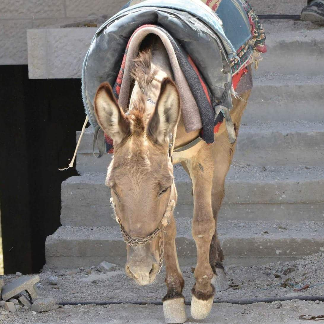 Safe Haven for Donkeys