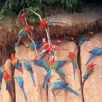 MOCHILEROS PERU