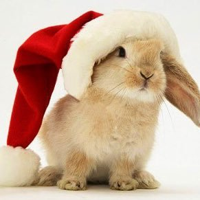 The Christmas Bunny.Merry Christmas Bunny On Twitter Allenwest Gailtalk