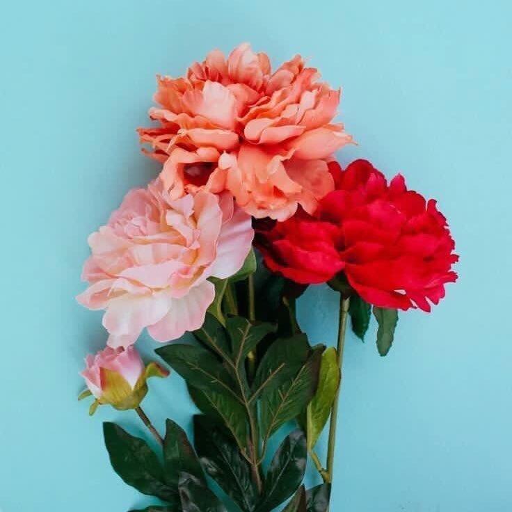 Flowers 🌻 (@sweetfloweers )