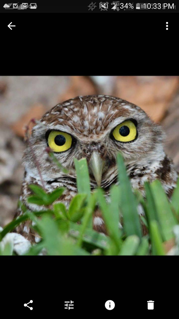 fkk owl