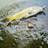 多摩川で小魚を釣る会のアイコン