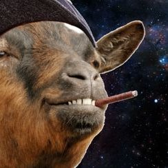 Space Goat (@spacegoat420)   Twitter