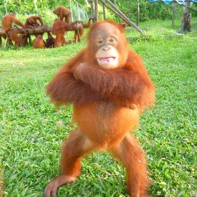 Image result for orangutans