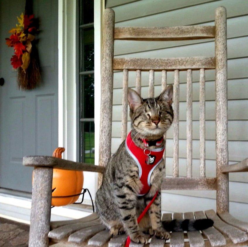 Pebbles Blind Cat