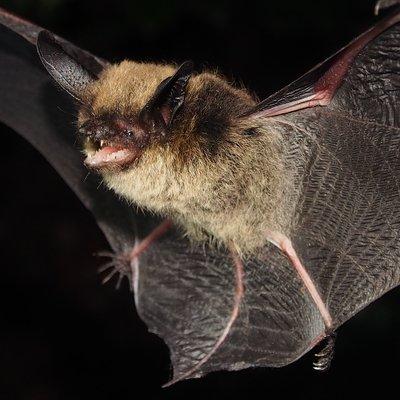 Alberta Bats's Twitter Profile Picture