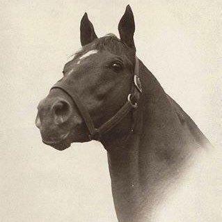 InMemoriamFamousRacehorses
