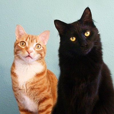 Cole & Marmalade (@ColeTheBlackCat) Twitter profile photo