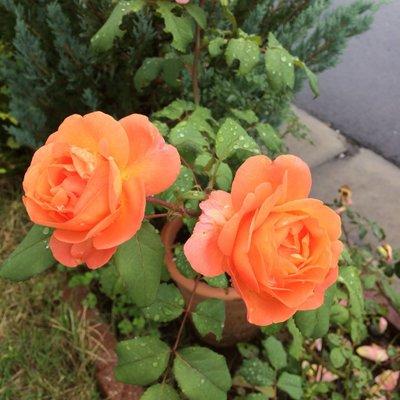@orange_sky22
