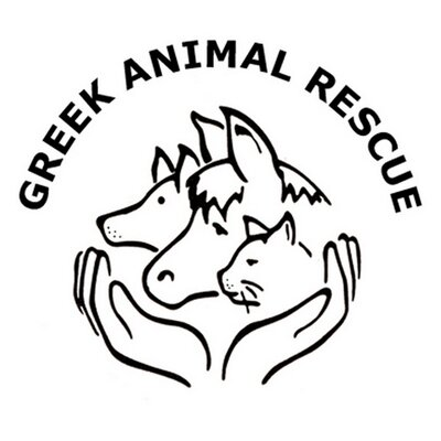 Image of: Greek Greek Animal Rescue Twitter Greek Animal Rescue On Twitter