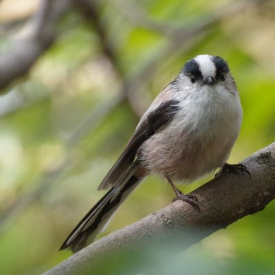 公立鳥取環境大学 鳥部 (@TUES_b...