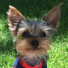 Bentley the Blogging Dog