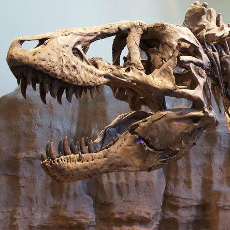 Tyrannosaurus Wrecked