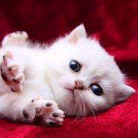 @kittycat