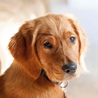 Cobb Animal Services