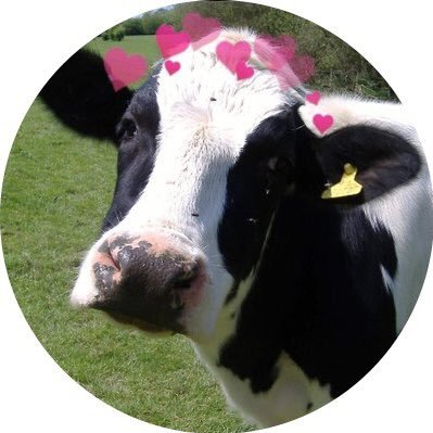 cows with hearts cowswithhearts twitter