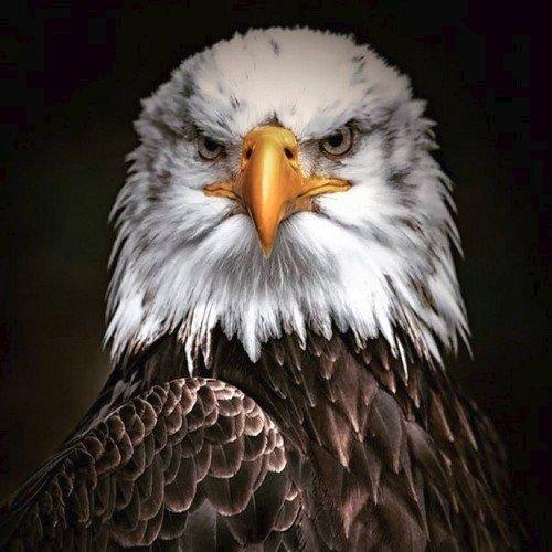 Black Eagle - YouTube