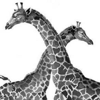 Grey Giraffes Greygiraffes 20 Twitter