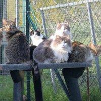 adozione gatti FI