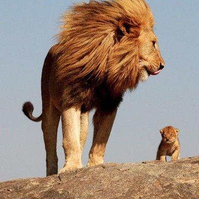 liongodfather