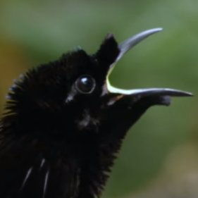 ベンタブラックな鳥@GW過ぎまで低浮上 (@vantablack_bird