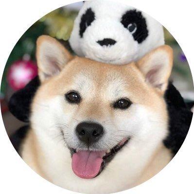 🐕 (@zboah) Twitter profile photo