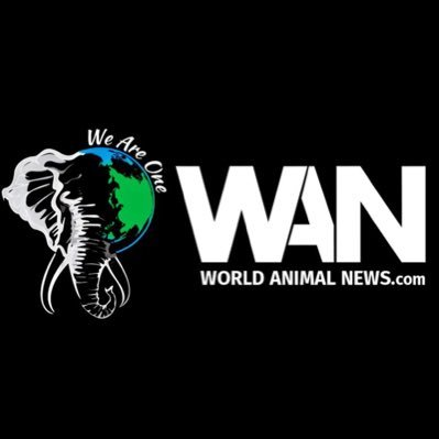 World Animal News